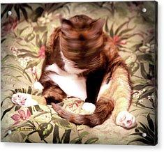 Kitty Says No Acrylic Print