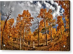 Acrylic Print featuring the photograph Knights Of Pythias Autumn by Kevin Munro