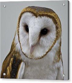 Knowing Barn Owl Acrylic Print by LeeAnn McLaneGoetz McLaneGoetzStudioLLCcom