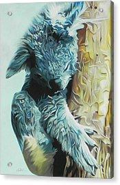 Koala Acrylic Print by Paul Miners