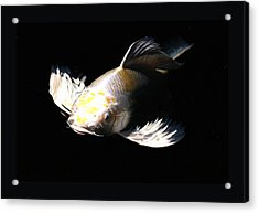 Koi Coming To The Light Acrylic Print