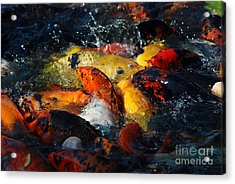 Acrylic Print featuring the photograph Koi Fish by Eva Kaufman