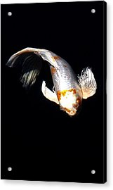 Koi From Above Acrylic Print by Don Mann