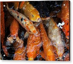Acrylic Print featuring the photograph Koi In Pond by Peter Mooyman