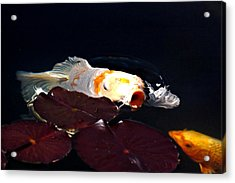 Koi In The Lillies Acrylic Print by Don Mann