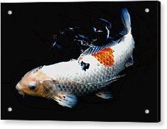 Koi Rising Acrylic Print by Don Mann