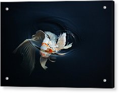 Koi Rising In The Moonlight Acrylic Print by Don Mann