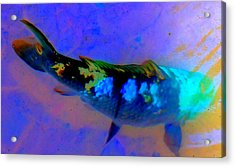 Koi Story One A Acrylic Print by Randall Weidner