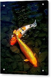 Koi Story Two C Acrylic Print by Randall Weidner