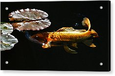 Koi Under Lillies Acrylic Print