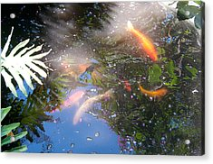 Kois In Motion Acrylic Print by Herman Boodoo