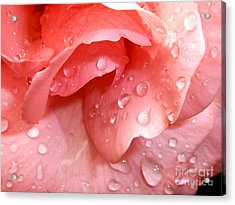 La Vie En Rose Acrylic Print by Jan Willem Van Swigchem