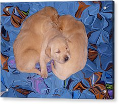 Lab Pups 2 Acrylic Print by Aimee L Maher Photography and Art Visit ALMGallerydotcom