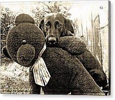Labrador And Holiday Teddy Acrylic Print