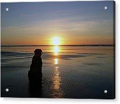 Labrador Watching The Sun Set Acrylic Print