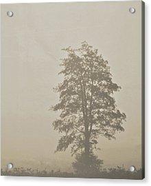 Lace Acrylic Print by Odd Jeppesen
