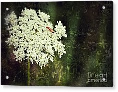 Lacy Anne Acrylic Print