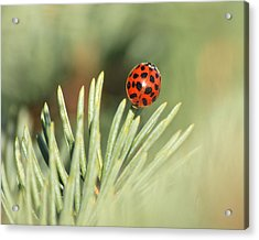 Acrylic Print featuring the photograph Lady Beetle On A Needle by Penny Meyers