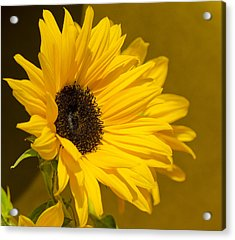 Acrylic Print featuring the photograph Lady Sunflower by MaryJane Armstrong