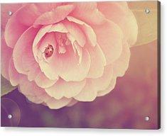 Ladybird On Camellia Acrylic Print by Photo - Lyn Randle