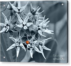Ladybug Flower Acrylic Print