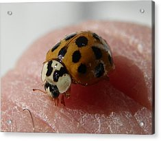 Acrylic Print featuring the photograph Ladybug On Finger by Chad and Stacey Hall