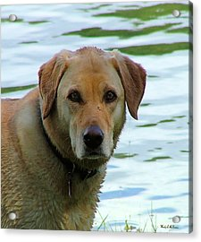 Lake Dog Acrylic Print by Wendy McKennon