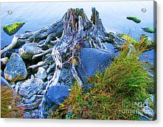 Acrylic Print featuring the photograph Lake Shore Weathered Stump by Michele Penner