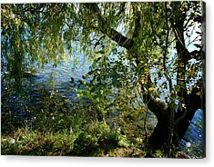 Lakeside Tree Acrylic Print