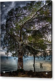 Lakeside Tree Acrylic Print by Tommy Farnsworth