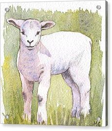 Lamb Acrylic Print by Maureen Carter