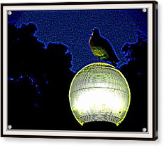 Lamp And The Bird Acrylic Print by Anand Swaroop Manchiraju