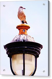 Lampost Gull   One Acrylic Print by Judy Via-Wolff