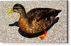 Land Duck Acrylic Print