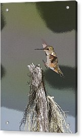 Landing Hummer- Abstract Acrylic Print by Tim Grams
