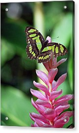 Landing On Top Acrylic Print by Amee Cave