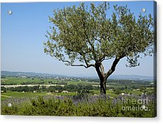 Landscape Of Provence. France Acrylic Print by Bernard Jaubert
