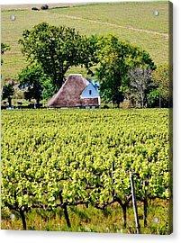 Landscape With Vineyard Acrylic Print by Werner Lehmann