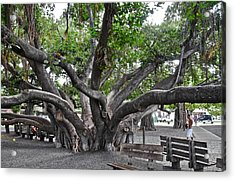 Acrylic Print featuring the photograph Largest Banyan Tree In The Usa by Kirsten Giving