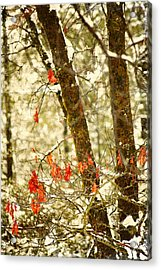 Last Leaves Clinging Acrylic Print by Bonnie Bruno