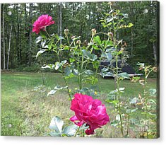 Last Roses Of The Summer For Mother  Acrylic Print