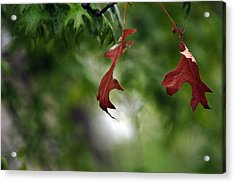 Acrylic Print featuring the photograph Last To Fall by Wanda Brandon