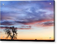 Late March Country Sunrise  Acrylic Print