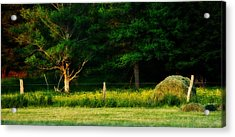 Late Summer's Eve Acrylic Print by Mary Frances