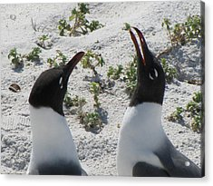 Laughing Penguins Acrylic Print