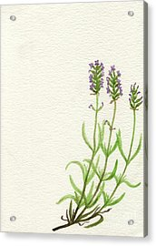 Acrylic Print featuring the painting Lavender by Annemeet Hasidi- van der Leij