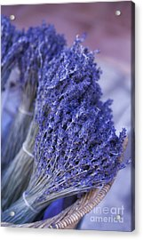 Lavender Bunches In Provence Acrylic Print by Paul Grand