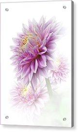 Lavender Dahlia Acrylic Print
