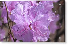 Lavender Elegance Acrylic Print