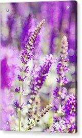 Lavender Haze Acrylic Print by Kim Fearheiley